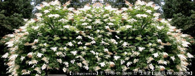 植物素材资料