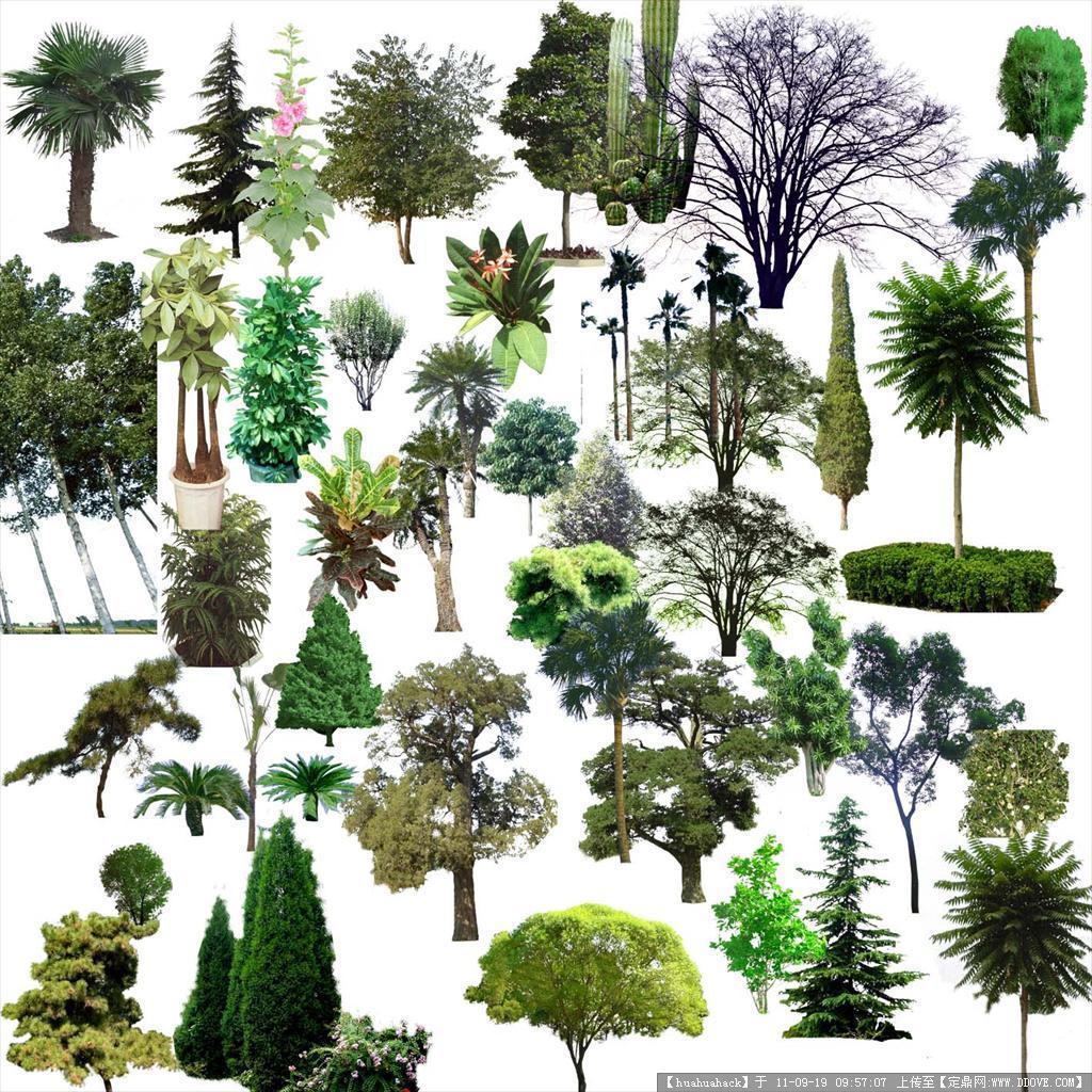 园林植物psd素材