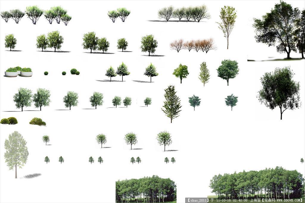 小树摄影图__树木树叶