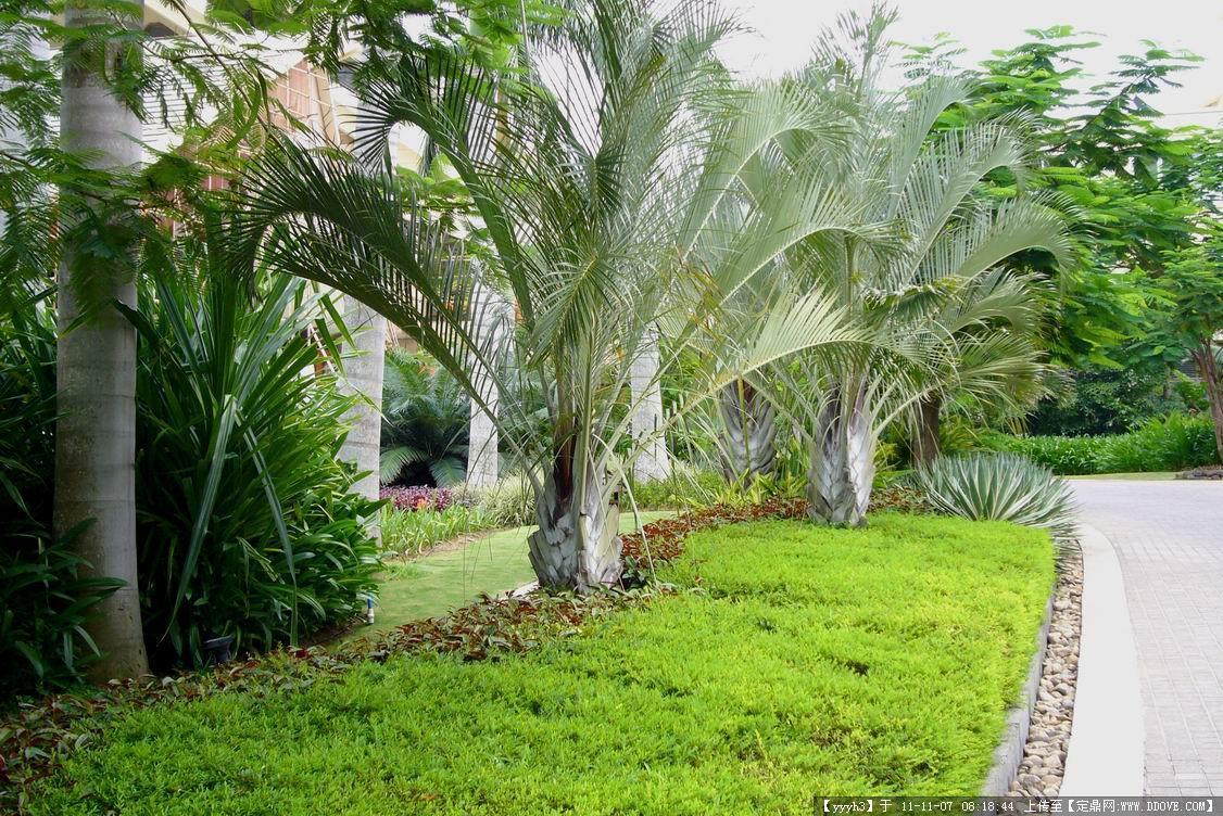海南三亚喜来登酒店的图片浏览,园林项目照片,商业区