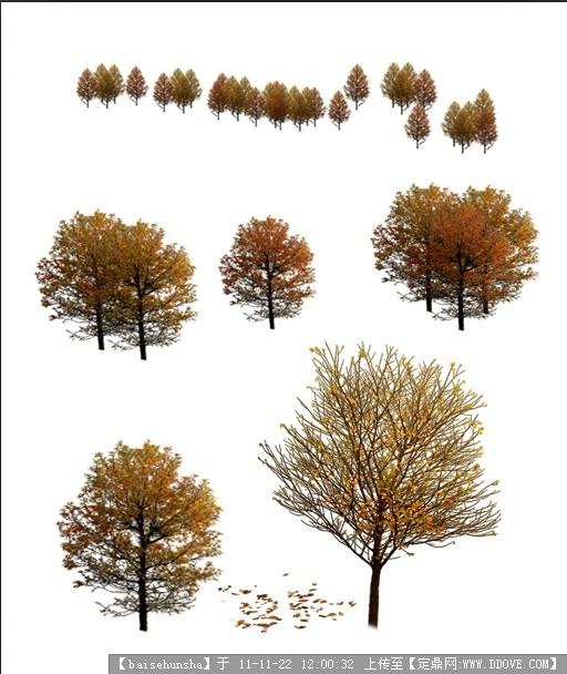 秋天树 psd植物素材