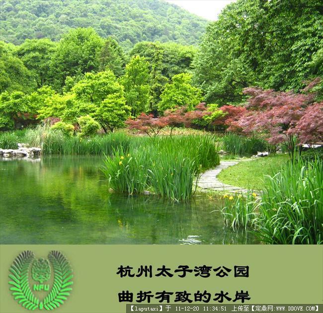 植物配置-城市公园植物造景22.jpg