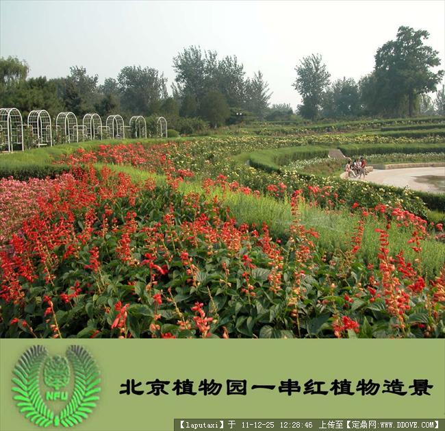 公园植物配置