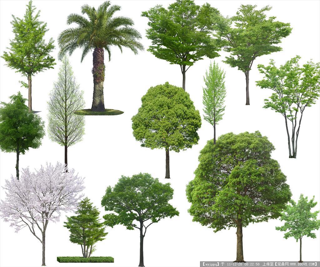 精品psd高清树木素材 可直接使用