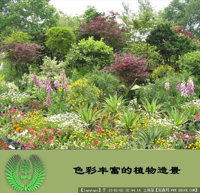 植物配置图
