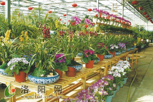 但节后,就有不少来花卉市场咨询养花方法的顾客,有的是买回去.