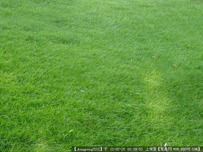 草坪后期素材的图片浏览