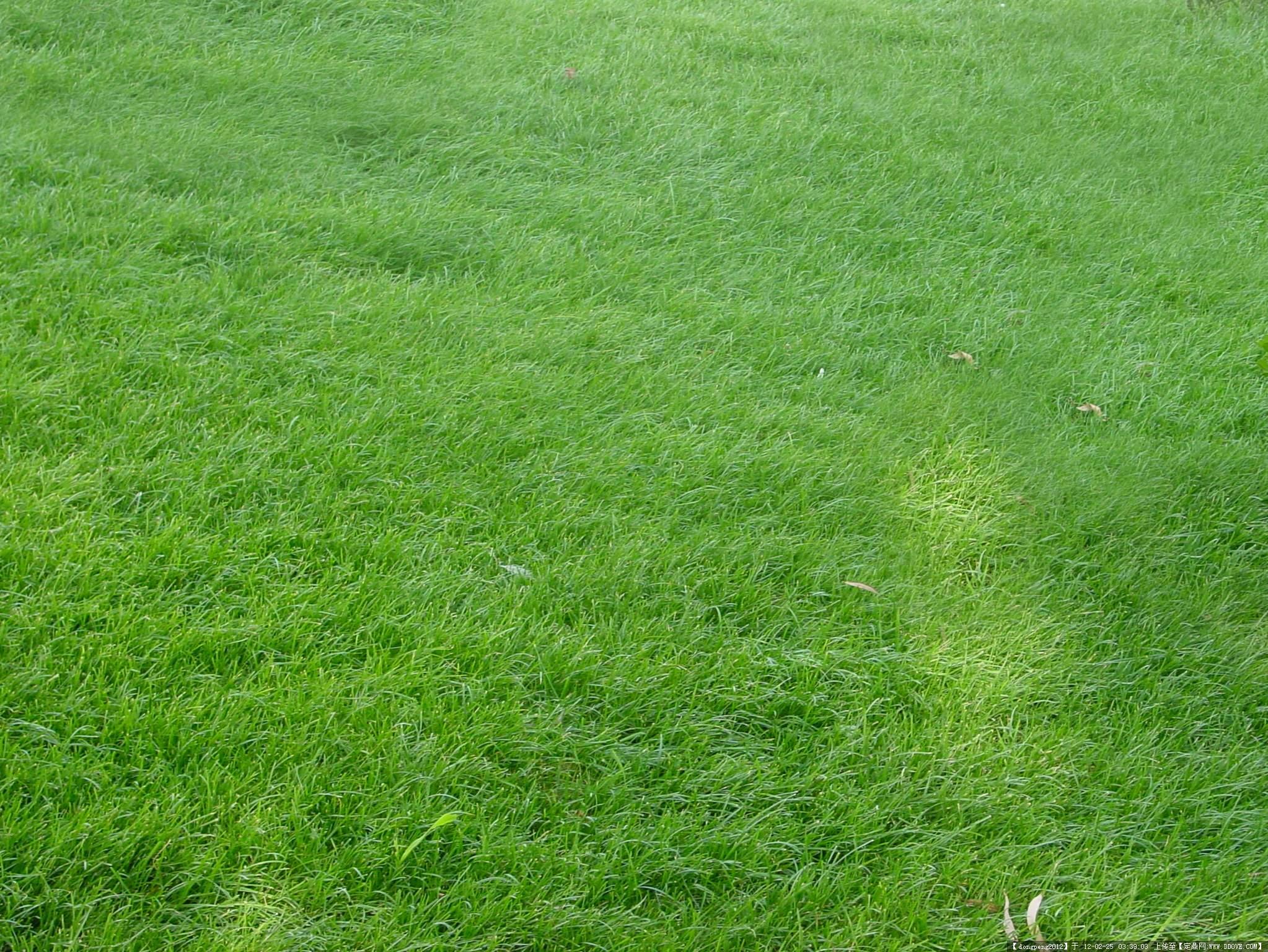 草坪后期素材的图片浏览,配景素材,园林植物,园林建筑