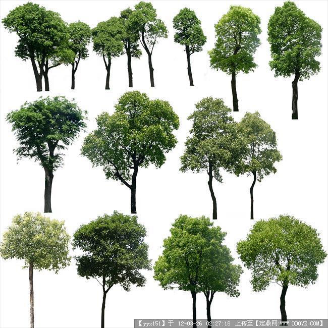 ps植物-乔木素材集