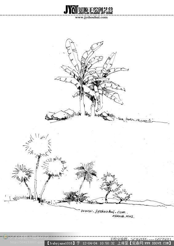 植物立面灌木素材线稿