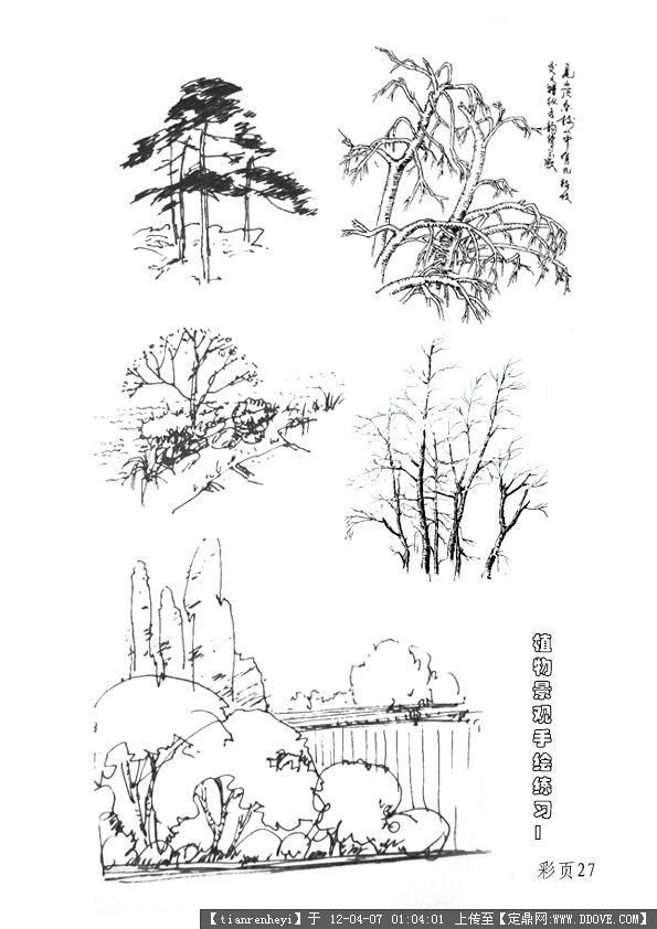 植物手绘立面图高清