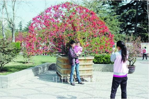郑州碧沙岗公园举办第四届海棠文化节 - 园林资讯 - 中国园林网图片