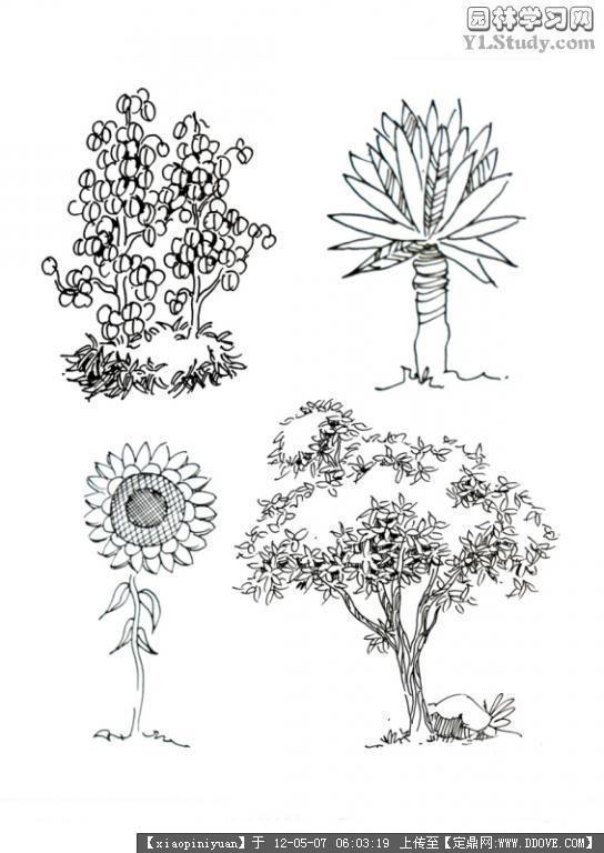 园林景观手绘-+5+9.jpg