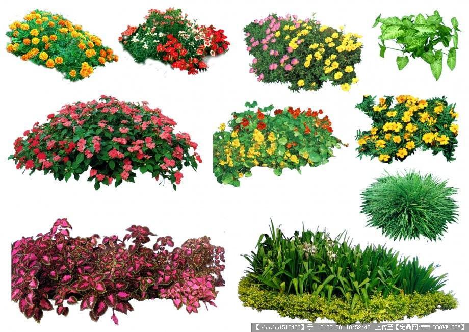景观植物素材