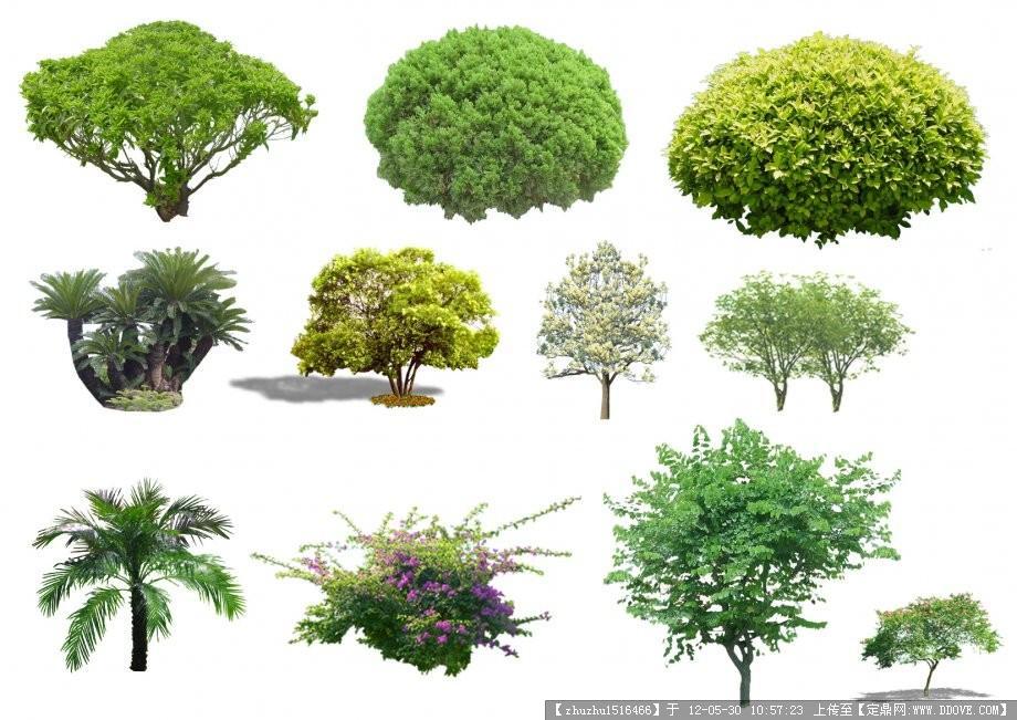 景观植物-084335ksz50basb05u7tb8图片