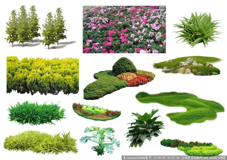 景观植物素材的图片浏览,配景素材,园林植物,园林建筑