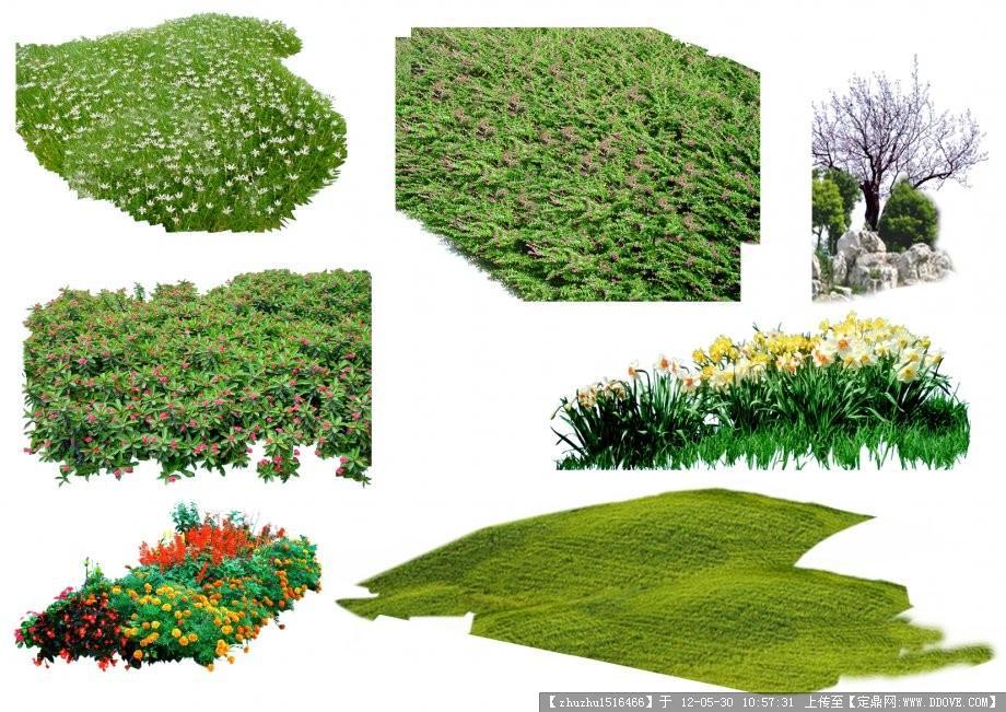 景观植物-084447u4svfaquvqpja74s图片