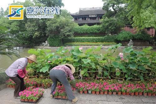 """浙江嘉兴:喜迎""""七一""""万盆鲜花装点湖心岛 - 园林资讯"""