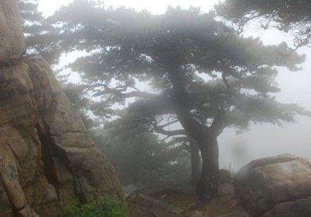 泰山西麓五大景观 不登顶的绝美风光 园林资讯