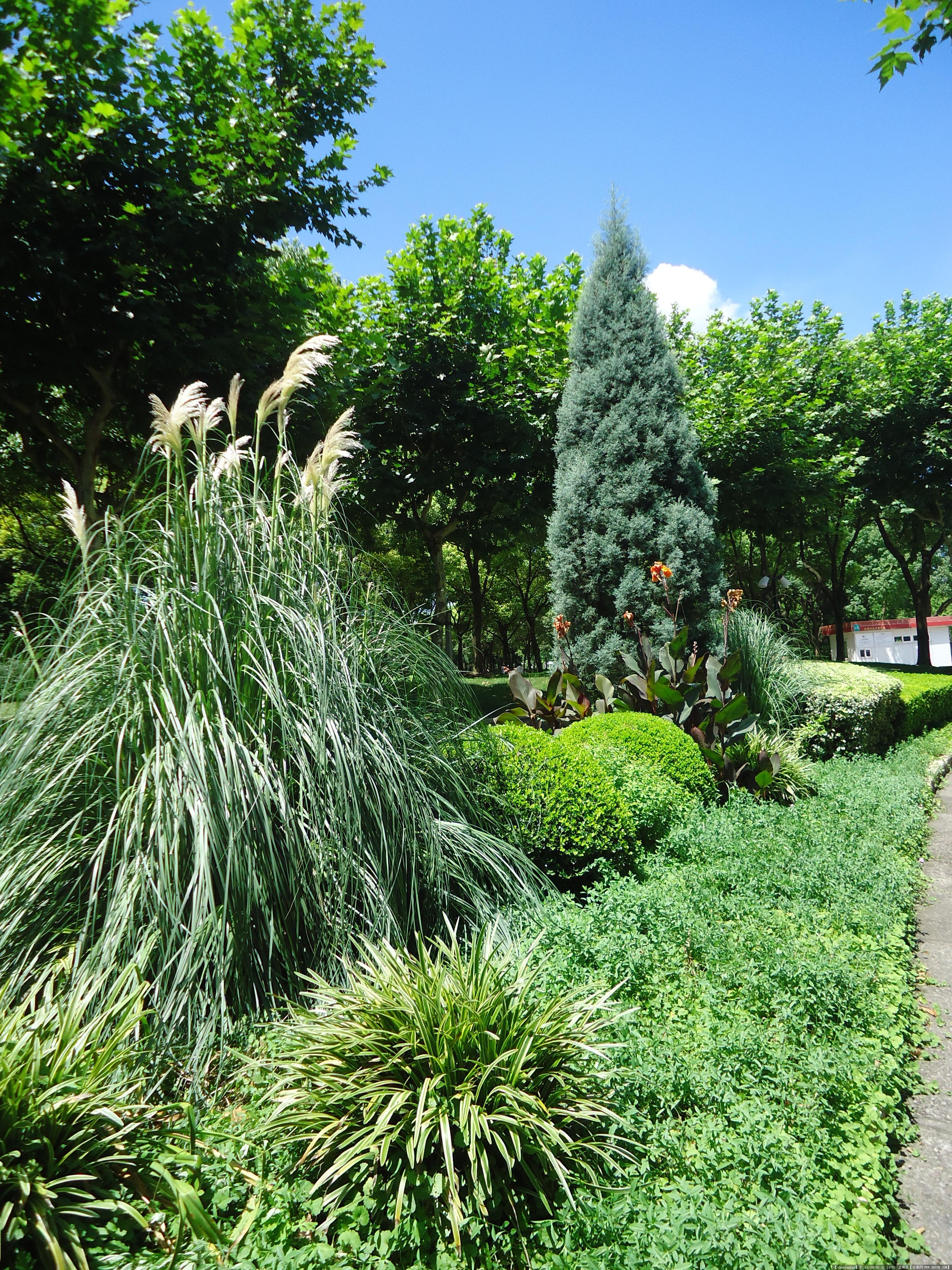 公园植物图片