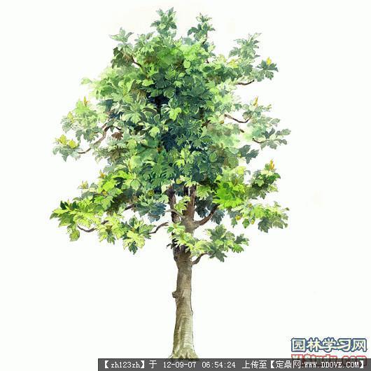psd植物素材的下载地址,配景素材,园林植物,园林建筑