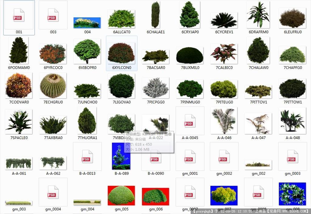 ps植物平面灌木素材