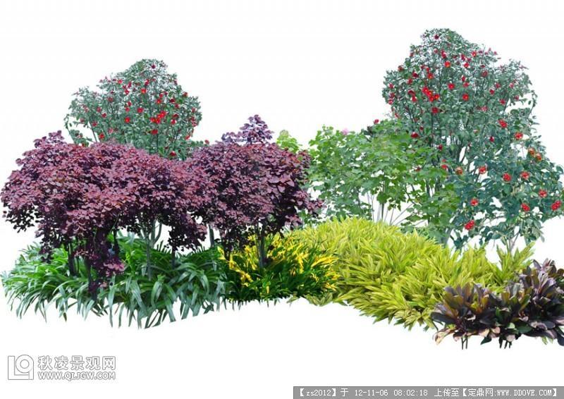 灌木景观园林植物