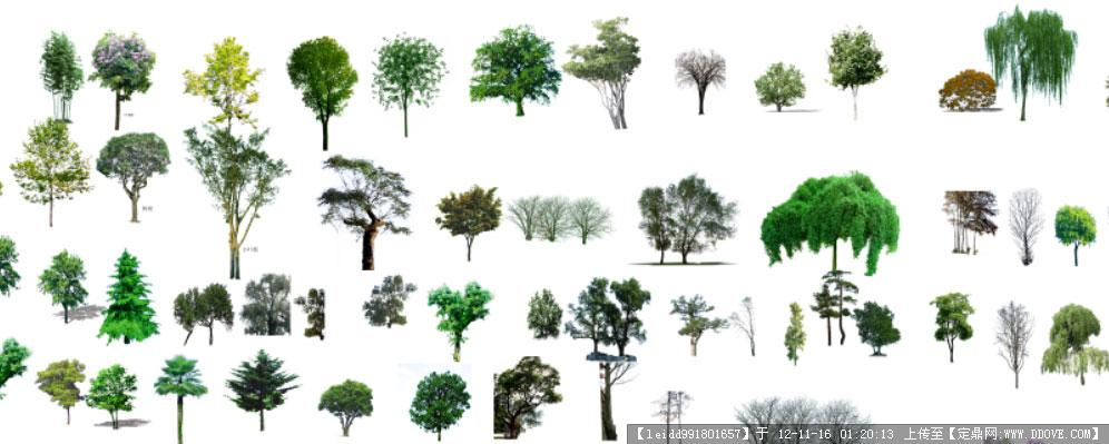 ps 植物高清图片