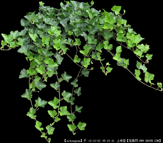 植物ps平面图