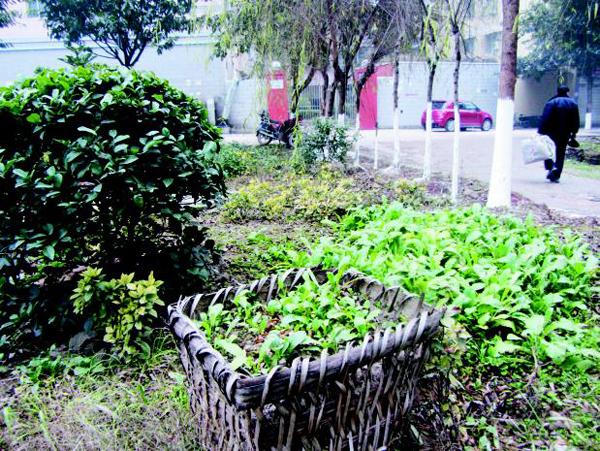 菜园ppt图片素材
