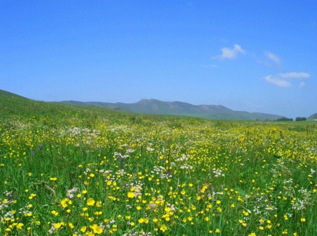 4月3日消息:春季是踏青赏花的好时节!春天之美,在于繁花似锦、百花齐放。梅花、桃花、樱花、郁金香、玉兰花……朵朵鲜花散发着春的气息,绿树红花,如诗如画,令人们陶醉。清明小长假将至,各地公园、景区也将迎来景观最美、游客量攀升的春季踏青赏花月。 当人们脱下厚重的冬装,到户外体验春的温暖绚烂,沉醉于春日美景时,也不能忘记礼仪,文明出游,保护环境,是我们的责任,也是我们的义务。 然而,在我们身边,却时常有许多不文明的现象,有些游客为了能与花零距离接触,摇树制造人工花瓣雨,或索性