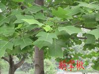 园林植物分类